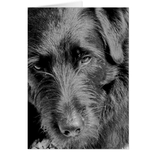 Tarjetas del perro, Dora