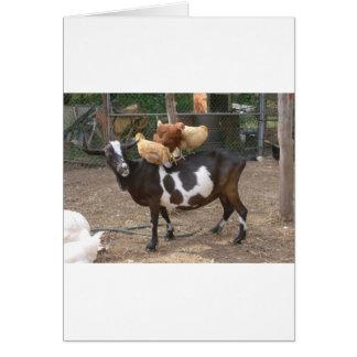 Taxi de la cabra tarjeta