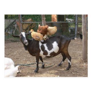 Taxi de la cabra postal