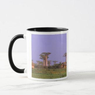 Taza África, Madagascar, Morondava. Baobabs