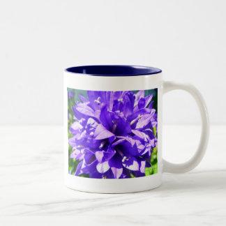 Taza Bicolor Bellflower agrupado (glomerata Superba del
