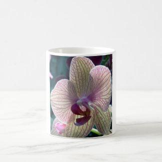Taza blanca básica de la orquídea del Del-Rayo