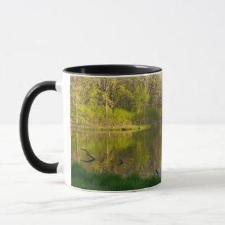 Taza Charca y bosque del borrachín del parque de Battle