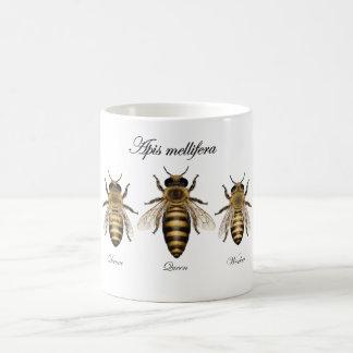 Taza De Café Abeja europea de la miel (mellifera de los Apis)