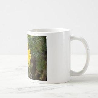 Taza De Café Amarillo del Cu de la flor de la margarita