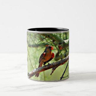 Taza de café cardinal femenina