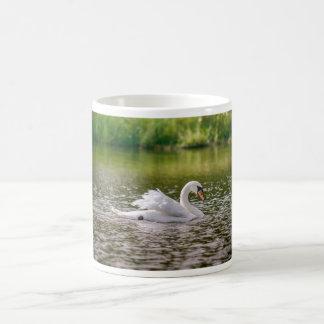 Taza De Café Cisne blanco en un lago