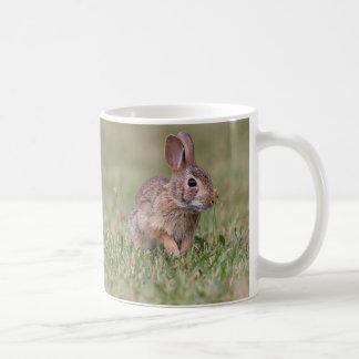 Taza De Café Conejo de conejo de rabo blanco salvaje