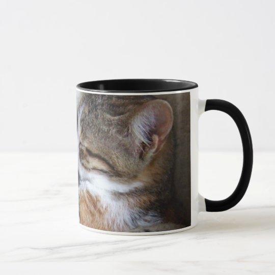 Taza de café del gato