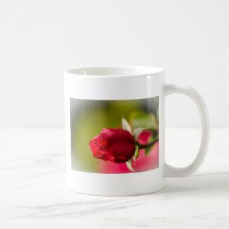 Taza De Café Diseño ascendente del cierre del rosa rojo