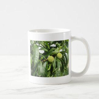 Taza De Café Dos melocotones verdes inmaduros que cuelgan en un