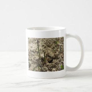 Taza De Café Espárrago verde joven que brota de la tierra