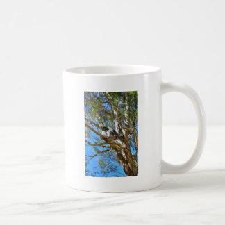 TAZA DE CAFÉ FROGMOUTH ROJIZO QUEENSLAND RURAL AUSTRALIA
