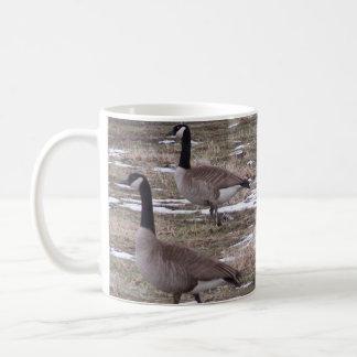 Taza De Café gansos de Canadá