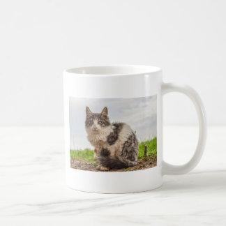 Taza De Café gato