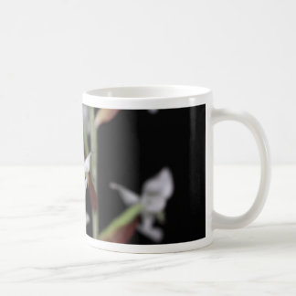 Taza De Café La flor de la orquídea Ludisia se decolora