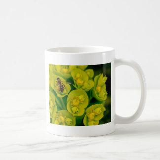 Taza De Café La planta del Gopher del desierto