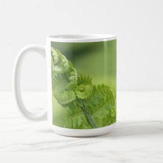 Taza De Café Las hojas del helecho que se encrespaban, verdor,