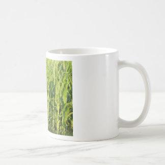 Taza De Café Las plantas de maíz verde están creciendo en
