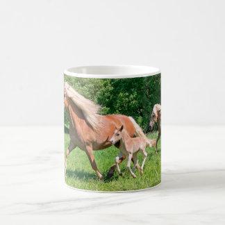 Taza De Café Los caballos de Haflinger con los potros lindos