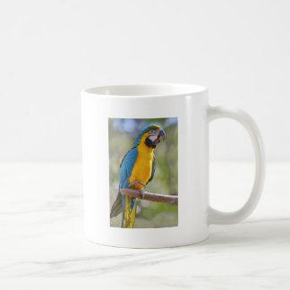 Taza De Café Macaw de Gelbbrustara en perca