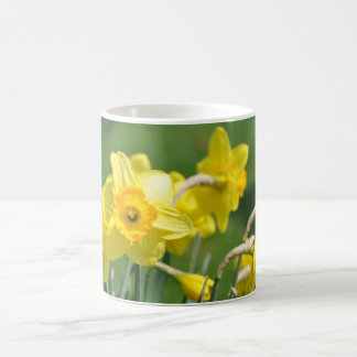 Taza De Café Narcisos
