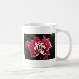 Taza De Café Orquídea roja