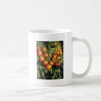 Taza De Café Plantas de tomate que crecen en el jardín