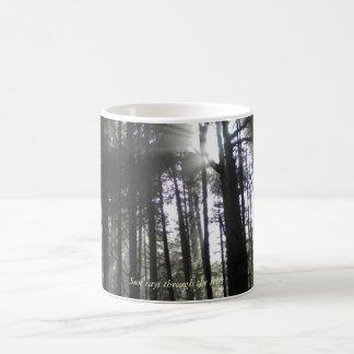 Taza De Café Rayos de Sun a través de los árboles
