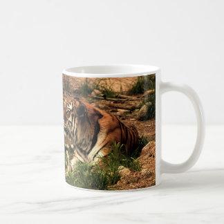 Taza De Café Tigre, precioso y acentuadamente