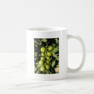 Taza De Café Tomates verdes que cuelgan en la planta en el