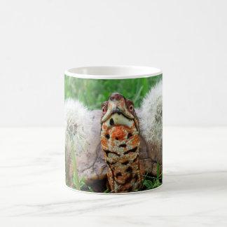 Taza De Café Tortuga de caja colorida