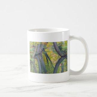 Taza De Café Troncos de árbol de la caída con la reflexión en