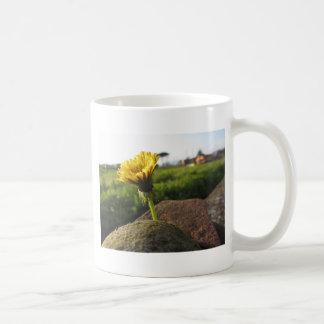 Taza De Café Wildflower amarillo que crece en piedras en la