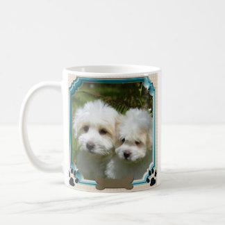 Taza de Cavachon, perro modificado para requisitos