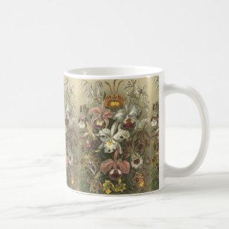 Taza de Orchideae