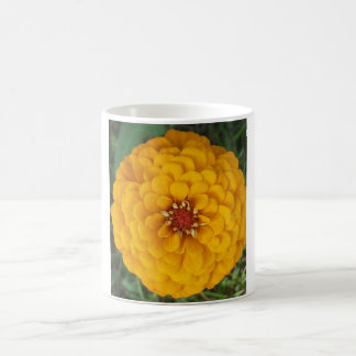Taza de oro de la flor del Zinnia