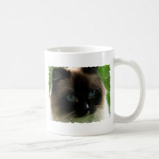 Taza hermosa del gato de Ragdoll
