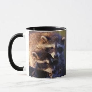 Taza Junto para siempre mapaches
