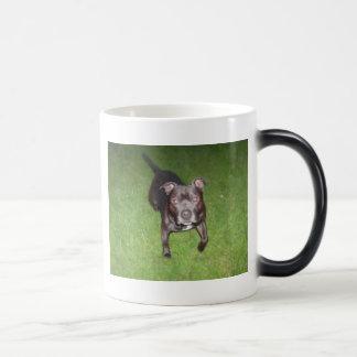 Taza Mágica Bull terrier hermoso