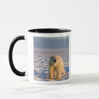 Taza oso polar, maritimus del Ursus, en el hielo y la