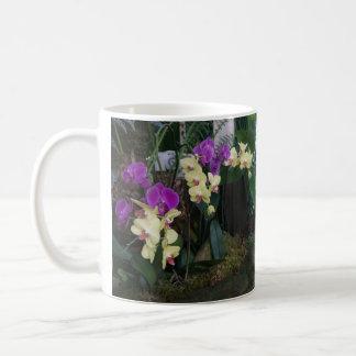 Taza púrpura y amarilla de las orquídeas