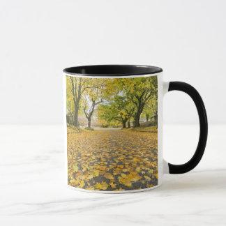 Taza Vecindad de Eastmoreland en otoño