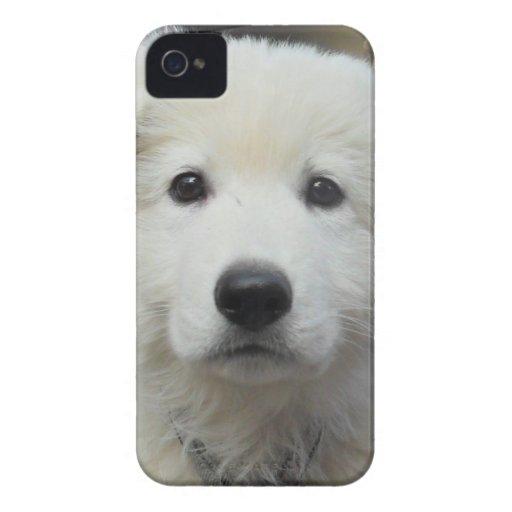 teddy_002.jpg Case-Mate iPhone 4 coberturas