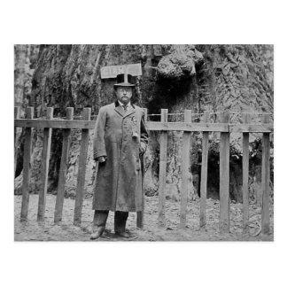 Teddy Roosevelt en la arboleda grande Santa Cruz Postal