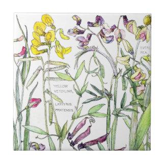 Teja botánica de la flor del Wildflower del