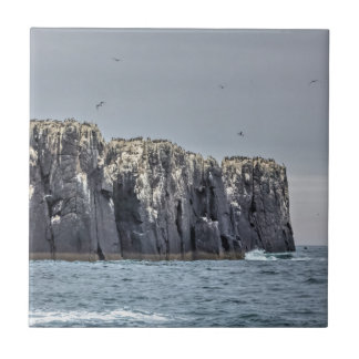 Teja cuadrada de los acantilados de las islas de
