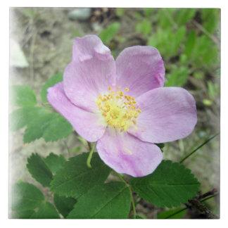Teja de cerámica grande subió de la foto del rosa