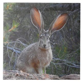 Teja de la fauna, de cerámica, conejos, jackrabbit