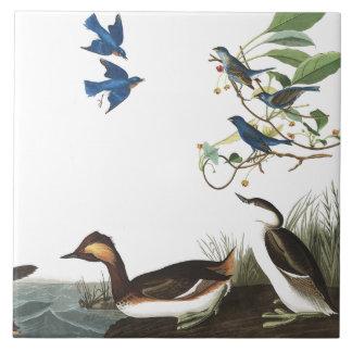 Teja de los animales de la fauna de los pájaros